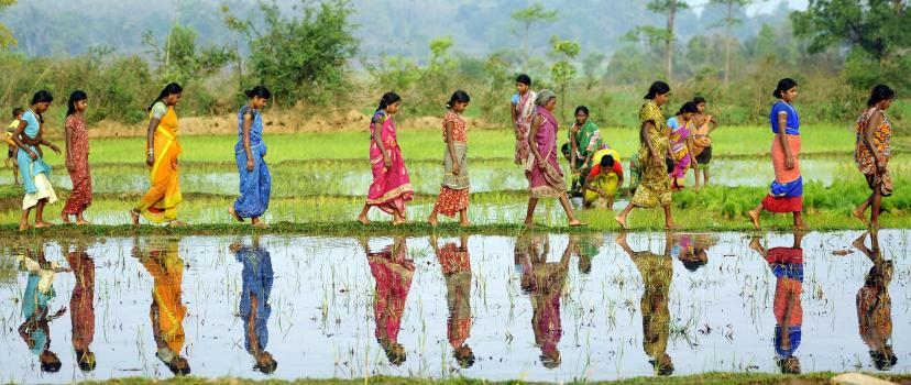 Women walk across a rice paddy in Odisha, India. Photo credit: Justin Kernoghan